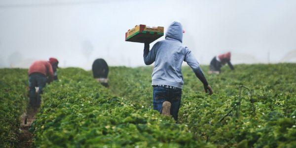 Les entreprises québécoises pourront embaucher plus de travailleurs étrangers